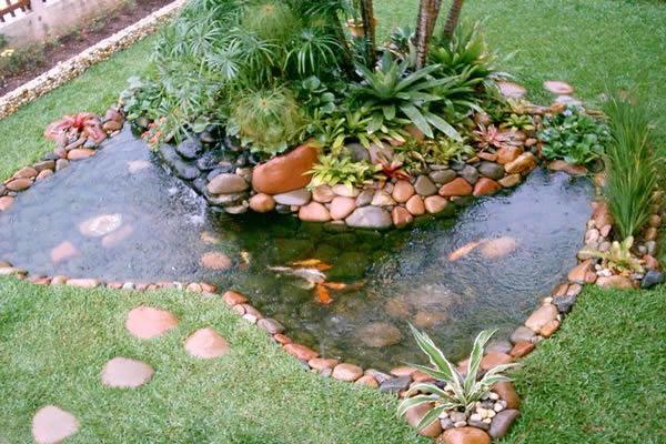 Peixe vida lagos ornamentais fontes peixes e aqu rios for Como criar caracoles de jardin